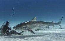 Posezení se žraloky: Tváří v tvář zabijákům!