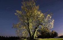 3. nejkrásnější strom Evropy? Lípa z Lipky!