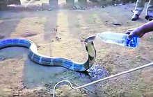 Kobra v indické vesnici: Vodu, proSSSSSííííím...