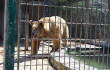 Chlapec (9) přelezl v zoo plot: Medvěd mu sežral ruku!