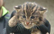 Dvojčata kočky rybářské: Holky co se potápějí!