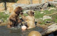 Zvířata si projevují něžnosti jako lidé: Zoo plná lásky!