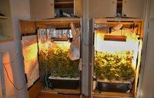 Student (24) si přivydělával: Ve skříni na kolejích pěstoval marihuanu!