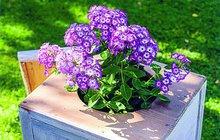 Dejte starým kouskům ještě šanci: Harampádí na zahradě poslouží!