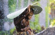 Zvířata se před deštěm a vodou důvtipně chrání:   Deštník? Popadnu lupen a jsem v suchu!
