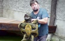 Tyhle želvy neuvidíte ani v zoo