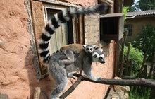 Když je Zájezd plný zvířat: Na návštěvě vrodinném zooparku!