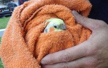 Papoušek uvízl na stromě!