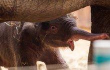 Sloní kluk se má čile k světu!