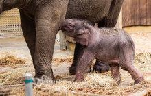 Sloní kluk dostal jméno Chandru!
