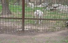 Drama v zoo Olomouc: Vlk kousl dívku (3) do kolena!