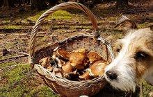 Konec prázdnin a počasí k houbaření!