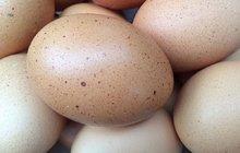 Lidl stahuje vejce se salmonelou!