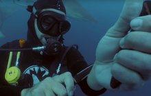 Bláznivý pokus má zbavit lidi strachu: Před žraloky se řízl do zápěstí!
