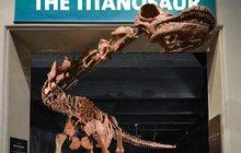 Dinosaurus rozměrů Boeingu 737: 40 metrů a 69 tun!
