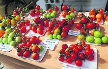Rajčata nasladko i jako koktejl: Festival rajčat!