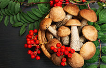 DARY PODZIMU: Poznejte léčivou moc hub a brambor!