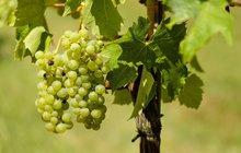 DARY PODZIMU: Zkuste domácí peeling z hroznového vína!