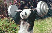 Zvířecí olympionička Basi (†37): Nejstarší a nejšikovnější  panda světa pošla...