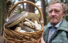 Už v neděli se ochladí a bude pršet: Babí léto končí, ale houbařům nastanou žně!