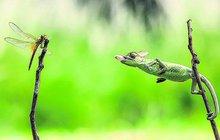 Chameleon má speciální techniku lovu: Svačina v setině!