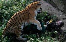 Ruská ošetřovatelka bojuje o život: V zoo ji potrhal tygr!