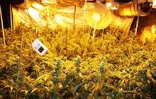 Odhalili čtyři pěstírny marihuany: Vybavení odváželo pět náklaďáků!