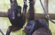 Zoo přišla o ikonu: Ňuňáka zabila rakovina plic