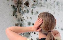 7 kroků, jak zatočit s plísní: Zbavte se nejhoršího alergenu!