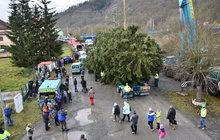 Tohle je vánoční strom pro Prahu: Přijel z Křivoklátska!