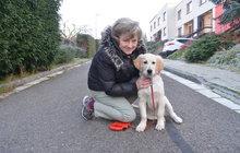 Krádež psa u supermarketu: Ženě (66) štěně vrátili policisté!