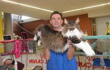 Přehlídka zvířecí krásy v Olomouci: To jsou ale kočky!