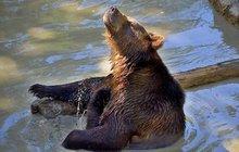 Otužilý medvěd Max z Tábora: Zimní koupačka, to je moje!
