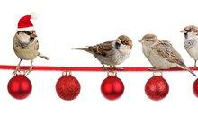 Jak o svátcích řešit zdravotní problémy, nebo se jim raději vyhnout? Poradíme Vám!