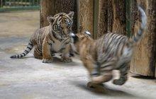 Jak se baví mláďata v pražské zoo: Vánoce? To je legrace!