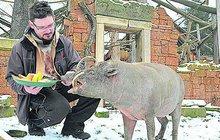 Dárky pro zvířata v zoo: Nejvíc toho spráskal prasojelen