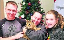 Ztracená kočka jako dárek: Vrátila se domů po třech letech!