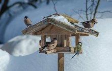 Když napadne sníh a ochladí se, budou ptáčci vděční za potravu: Krmítko je pro ně v zimě maják!
