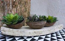<strong>Využijte jedinečnost struktury, pevnosti a originality skořápky kokosového ořechu. V exotických zemích z nich vytváří jedinečné šperky, slouží jako misky na pochutiny i na nápoje nebo polévku. Designérka Martina Krumphanslová z nich vytvořila okrasné květináče na sukulenty a skalničky.</strong>