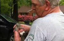 Zachráněnou veverku vypustili do přírody! Situace jako z hororu!