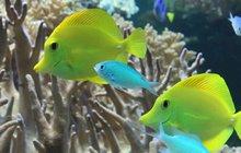 Není třeba cestovat tisíce kilometrů, není třeba se potápět, aby mohl našinec obdivovat život pod vodní hladinou. Tajemné mořské hlubiny i živočichy, kteří je obývají, můžete spatřit zbezprostřední blízkosti i u nás v Česku. Vydejte se tedy na prohlídku obřích mořských akvárií i jejich sladkovodních verzí.
