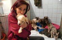 Stará se o 11 psů z množírny: Neznají vycházky, ani lásku lidí!