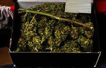 Pečivo vylidnilo dílnu: Sušenky byly s marihuanou!