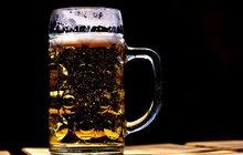 Kulturní tipy II: Na pivo nebo za medvědy?