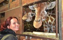 Ošetřovatelka žiraf Šárka (25) z Brna se stále učí rozumět zvířatům.