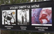 Snímky z potratů vystavili před okna školy!