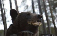 Hvězda seriálu Vzteklina: Medvěd Hugo má sourozence a rovnou trojčata!
