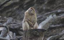 Makak se deště nebojí: Stačí se jen pořádně otřepat! A jaké nás čeká počasí?