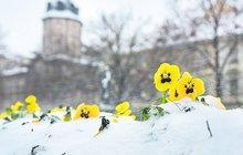 Jaro přichází nesměle: V noci bude dál mrznout!