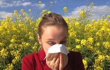 Pylová sezóna je skoro tu: Zatočte s alergií! 1. část